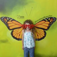 Sensational Butterflies #iHeartLondon2017